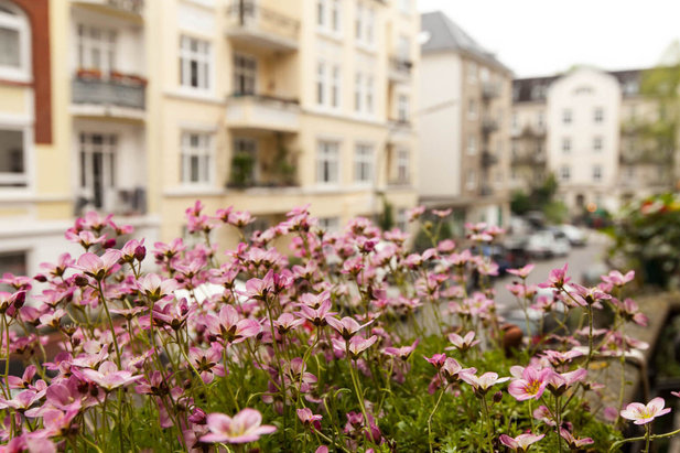 View from a balcony with flowers in the district Hamburg-Hoheluft - City-Wohnen Hamburg